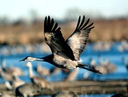 Crane-Flying