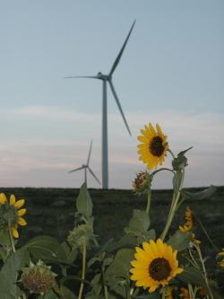 Windfarm-1