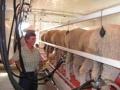 Irish-Cream-Sheep-Dairy-21